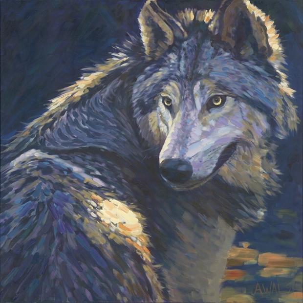 144 - Wolf